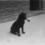 Ceci n'est pas un chien avec une Pipe