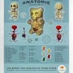 Anatomie d'un Ourson Bonbon Gomme [Photo Insolite]